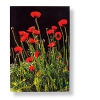 Blumenpostkarten - Sortiment mit 5 Karten